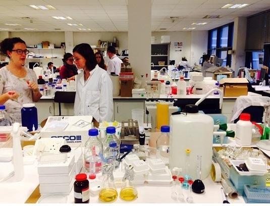 افضل جامعات الصيدلة في بريطانيا - جامعة الملكة، بيلفاست