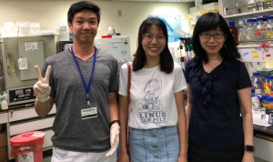 A 3-month internship training for an IMU Medical Biotechnology student at the Neuroscience Department in the Institute of Biomedical Sciences (IBMS), Academia Sinica.